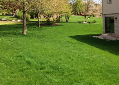 website pics-lawn install-4